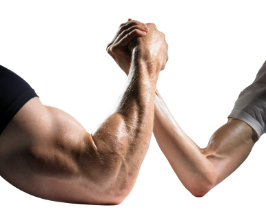 Strength Gains vs. Size Gains in Muscle